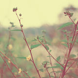 Vintage meadow flowers Royalty Free Stock Photo