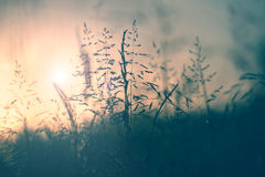 Vintage meadow sunset Stock Photos