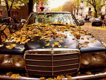 Vintage Mercedes. Covered in fall leaves Stock Images