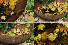 Vintage metal bowl and fallen maple leaves set Stock Images
