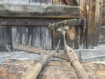 Vintage metal rake and hoe against the old wooden shed background. Agricultural tools. Vintage metal rake and hoe against the old wooden shed background stock image