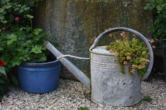 Vintage metal watering can with sedum. Sedum growing in a vintage metal watering can next to blue flower pot with geranium in front of concrete wall Stock Image