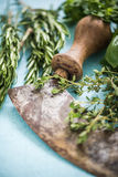 Vintage mezzaluna and fresh herbs Stock Photography