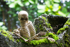 Vintage model skeletons on moss background. Still Life image; Human skeleton on the reef with moss Royalty Free Stock Images
