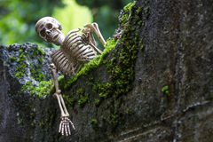 Vintage model skeletons on moss background. Still Life image; Human skeleton on the reef with moss Royalty Free Stock Photo