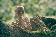 Vintage model skeletons on moss background Stock Photo