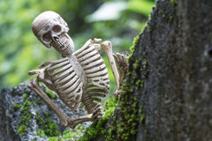 Vintage model skeletons on moss background. Still Life image; Human skeleton on the reef with moss Stock Images