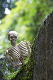 Vintage model skeletons on moss background. Still Life image; Human skeleton on the reef with moss Stock Photo