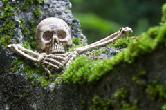 Vintage model skeletons on moss background. Still Life image; Human skeleton on the reef with moss Stock Photography