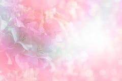 Vintage mou de frontière de bouganvillée de fleur avec le fond de filtre Images stock