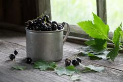 Vintage mug of black currant berries on rustic wooden table. Royalty Free Stock Photography