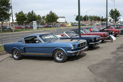 Vintage mustang row Royalty Free Stock Photography