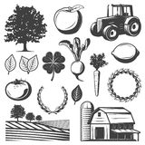 Vintage Natural Elements Set. With organic vegetables fruits tree clover tractor farm house and field landscape isolated vector illustration Royalty Free Stock Photos