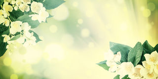 Vintage Nature Background with Flowers Stock Photography