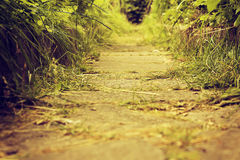 Vintage nature background Royalty Free Stock Photography