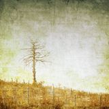 Vintage nature background with single tree Royalty Free Stock Photo