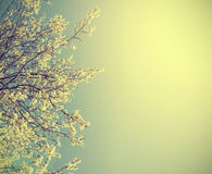 Vintage nature background. Royalty Free Stock Photos