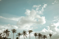 Vintage nature landscape of coconut palm tree on tropical beach blue sky with clouds  in summer, Royalty Free Stock Photo