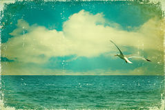 Vintage nature seascape with seagull in blue sky Royalty Free Stock Image
