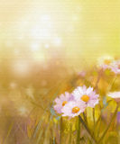 Vintage oil painting daisy-chamomile flowers field. Oil painting white daisy-chamomile flowers field at sunrise.Spring Wildflower season, soft color and blur Stock Image