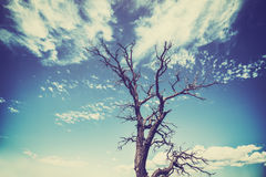 Vintage old film style withered tree with heavy vignette effect Stock Photography