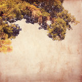 Vintage old paper with tree Stock Photography