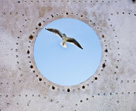 Vintage old porthole window with a view of the  bird Stock Photo