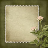 Vintage old postcard with roses Royalty Free Stock Photography