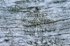 Vintage old wood background texture. Selective focus.Workpiece for design royalty free stock photography