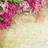 Vintage oleander frame Stock Images