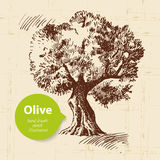 Vintage olive background Stock Images