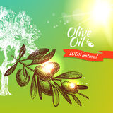 Vintage olive background. Hand drawn illustration Royalty Free Stock Photography