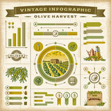 Vintage olive harvest infographic set Royalty Free Stock Photo