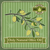 Vintage olive poster design. Royalty Free Stock Photos