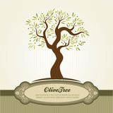 Vintage olive vector Royalty Free Stock Image