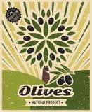 Vintage olive vector poster template design. Retro banner witn olive tree illustration Stock Image