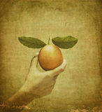Vintage orange in female hand Royalty Free Stock Images