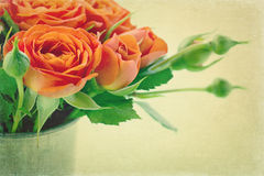 Vintage orange roses Royalty Free Stock Images