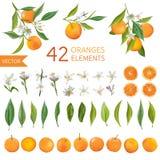 Vintage Oranges, Flowers and Leaves. Lemon Bouquetes. Watercolor Style Oranges. Vector Fruit Background stock illustration