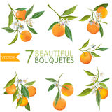 Vintage Oranges, Flowers and Leaves. Orange Bouquetes. Watercolor Style. Vector Fruit Background royalty free illustration