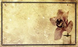 Vintage orchid Royalty Free Stock Images