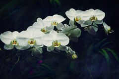 Vintage orchid Royalty Free Stock Photography