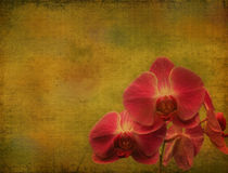 Vintage orchid Stock Photos