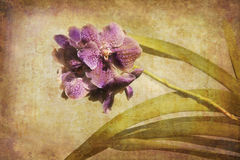 Vintage Orchid. Artistic work of my own in retro style - Flower postcards - purple Orchid Stock Photos