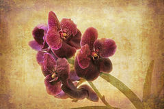 Vintage Orchid. Artistic work of my own in retro style - Flower postcards - purple Orchid Royalty Free Stock Photos
