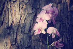 Vintage orchid flowers Stock Images