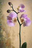 Vintage orchid Royalty Free Stock Photos