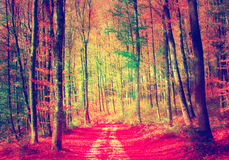 Vintage oversaturated autumn forest road Stock Photos