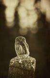 Vintage owl Stock Image