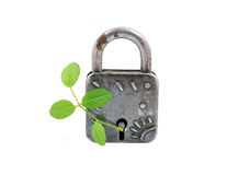 Vintage padlock and green plant Royalty Free Stock Images